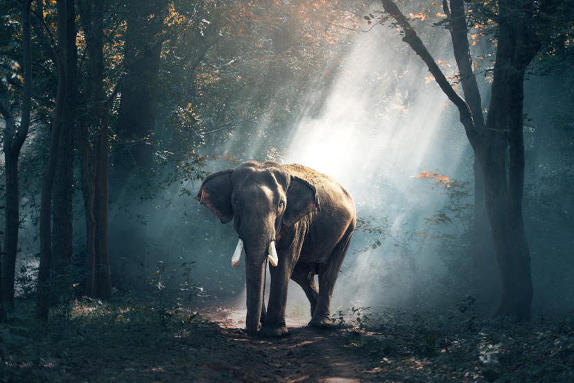 An elephant in the woods.
